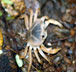 top angle crab images free nature photos pictures