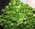 dhania corriander vegetable images free nature photos pictures